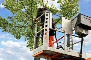 Baumschnitt, Baumpflege